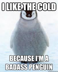 Cold Badass Penguin memes | quickmeme via Relatably.com