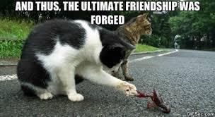 Funny-Friendship-Memes3-11.jpg via Relatably.com
