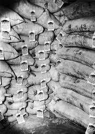 copy of the cold war by neilo vitali on prezi