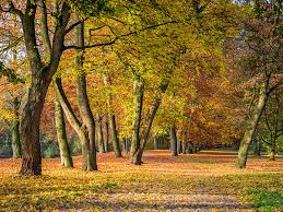 Why Do Leaves <b>Fall</b> in <b>Autumn</b>? | Britannica