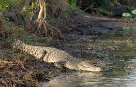 Darwin Crocodile Farm