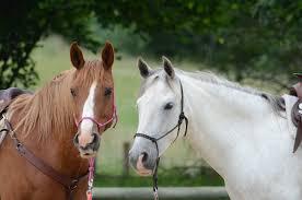 """Résultat de recherche d'images pour """"chevaux images"""""""