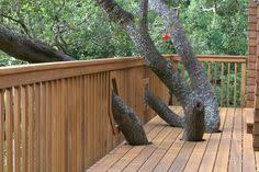 Image result for deck around a tree