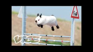 Cute Bunny Jumping Competition! | The Cute Show - YouTube