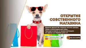 """Интернет-магазин одежды для <b>собак</b> """"О-<b>Дог</b>"""""""