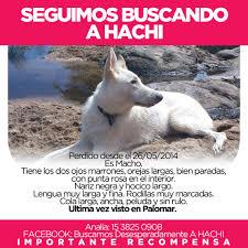 Buscando a Hachi