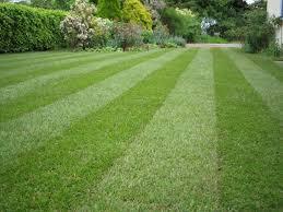 Image result for landscaping maintenance