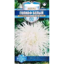 <b>Астра</b> «<b>Флорист</b>» в Ярославле – купить по низкой цене в ...
