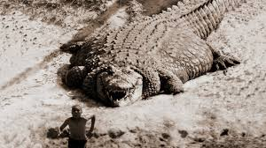 TOP 10 LARGEST <b>CROCODILES</b> In The World - YouTube