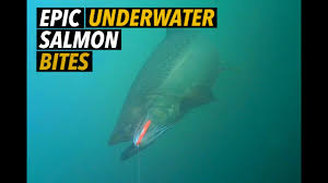 Awesome Underwater <b>Salmon Bites</b>! - YouTube