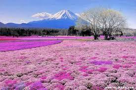 لكل محبي صور الطبيعة  اكبر تجميع لصور الطبيعة Images?q=tbn:ANd9GcREcts2-TdcoQNSAfIsmokvUJ2b0bFYp1iArVotW4gJRh9wtAsu