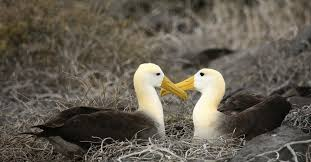 What We Can Learn From the <b>Love</b> Life of <b>Birds</b>   Time