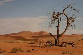 """Résultat de recherche d'images pour """"ils prêchaient dans le désert"""""""