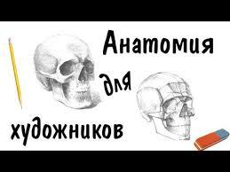 Рисунок <b>черепа</b>, пропорции лица Анатомия для <b>художников</b> ...