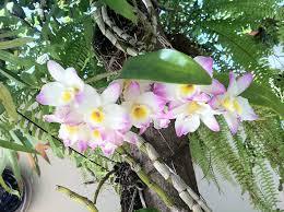 Resultado de imagem para coco para plantar orquidea