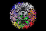 tobacco mosaic satellite virus