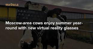 Moscow-area cows enjoy <b>summer</b> year-round with new virtual reality ...