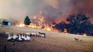 Adelaide fires in australia