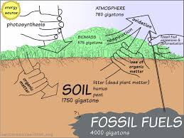 educas a level carbon cycle part at rhsb lessons teach turning air into dirt using atmospheric carbon and solar energy