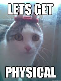 LETS GET PHYSICAL - SWEAT BAND CAT - quickmeme via Relatably.com