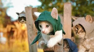 <b>Assassin's</b> Kittens! - YouTube