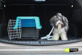 путешествие на машине с собакой: <b>ремень безопасности</b> или ...