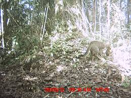 wild cam tws members what s eating lemurs in conservation wildcam lemurs 2