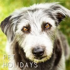 2019 pet dog