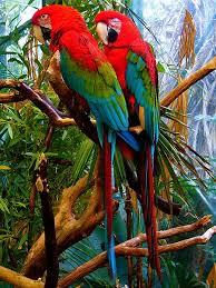أدخل وشاهد أروع وأجمل الطيور