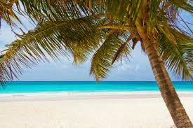 Image result for beach images