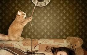 Обои кот, девушка, обои, <b>часы</b>, <b>мишка</b>, спит, bear, cat, <b>clock</b> ...