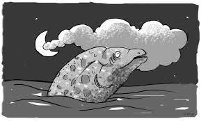 Risultati immagini per my little moray eel