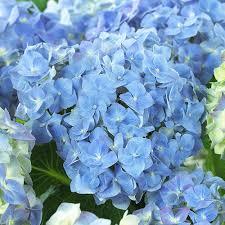 blue heaven 4 m