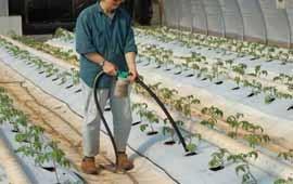 Лучшие <b>Удобрения для Теплиц</b> Правила Подкормки Растений