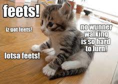 #tunatuesday   Tuna Tuesday   Cute <b>cats</b>, <b>Funny</b> animals, Crazy <b>cats</b>