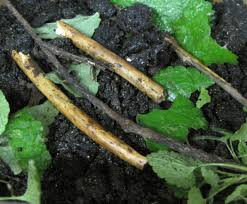 inches of living soil teaching biodiversity in the learning in