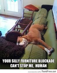Funny-Animal-Pictures-1.jpg via Relatably.com