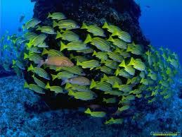 أكبر تجميع لأجمل صور من اعماق البحار (سبحان الله الخالق العظيم) Images?q=tbn:ANd9GcRGvdu7gzFhyRelXgEMhtXMVm6rEMqDq_h64JZn4lkOSk-eG1uKDQ