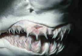 Image result for teeth images
