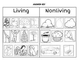 1000+ images about Ecosystem/Structures and Functions. on ...1000+ images about Ecosystem/Structures and Functions. on Pinterest | Living and nonliving, Classifying animals and Animal classification
