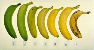 Which Of These Bananas Is Better For You - Ripe Or Unripe? via Relatably.com