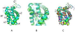 <b>High</b>-<b>Quality</b> NMR Structure of Human <b>Anti</b>-Apoptotic Protein ...