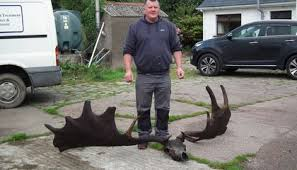 The Catch of the Day Is a 10,000-Year-Old Gigantic Deer <b>Skull</b> ...