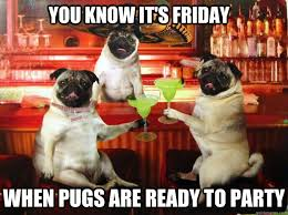 you know it's friday when pugs are ready to party - partipug ... via Relatably.com
