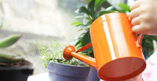 you might like the 16 best healthy edible plants to grow indoors read best office plants no sunlight