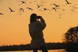 sacramento sacreamento river folsom lake rancho cordova boating bird watching