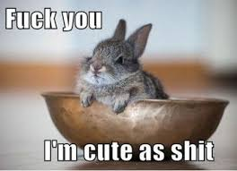 FunniestMemes.com - Funniest Memes - [Fuck You, I'm Cute As Shit...] via Relatably.com