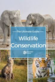 must see volunteer jobs pins un volunteer jobs event everything you need to know about volunteering in wildlife conservation