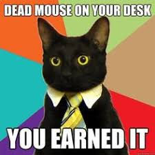 Memes We Like on Pinterest | Business Cat, Human Resources and ... via Relatably.com
