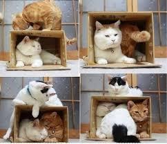 """Résultat de recherche d'images pour """"coussin pour chat fait maison"""""""